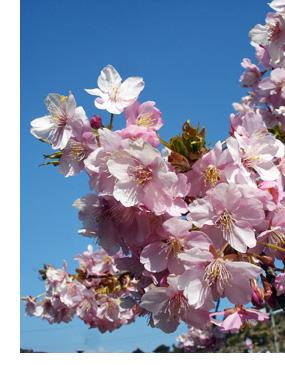 静岡市清水市民活動センターの公式ホームページ